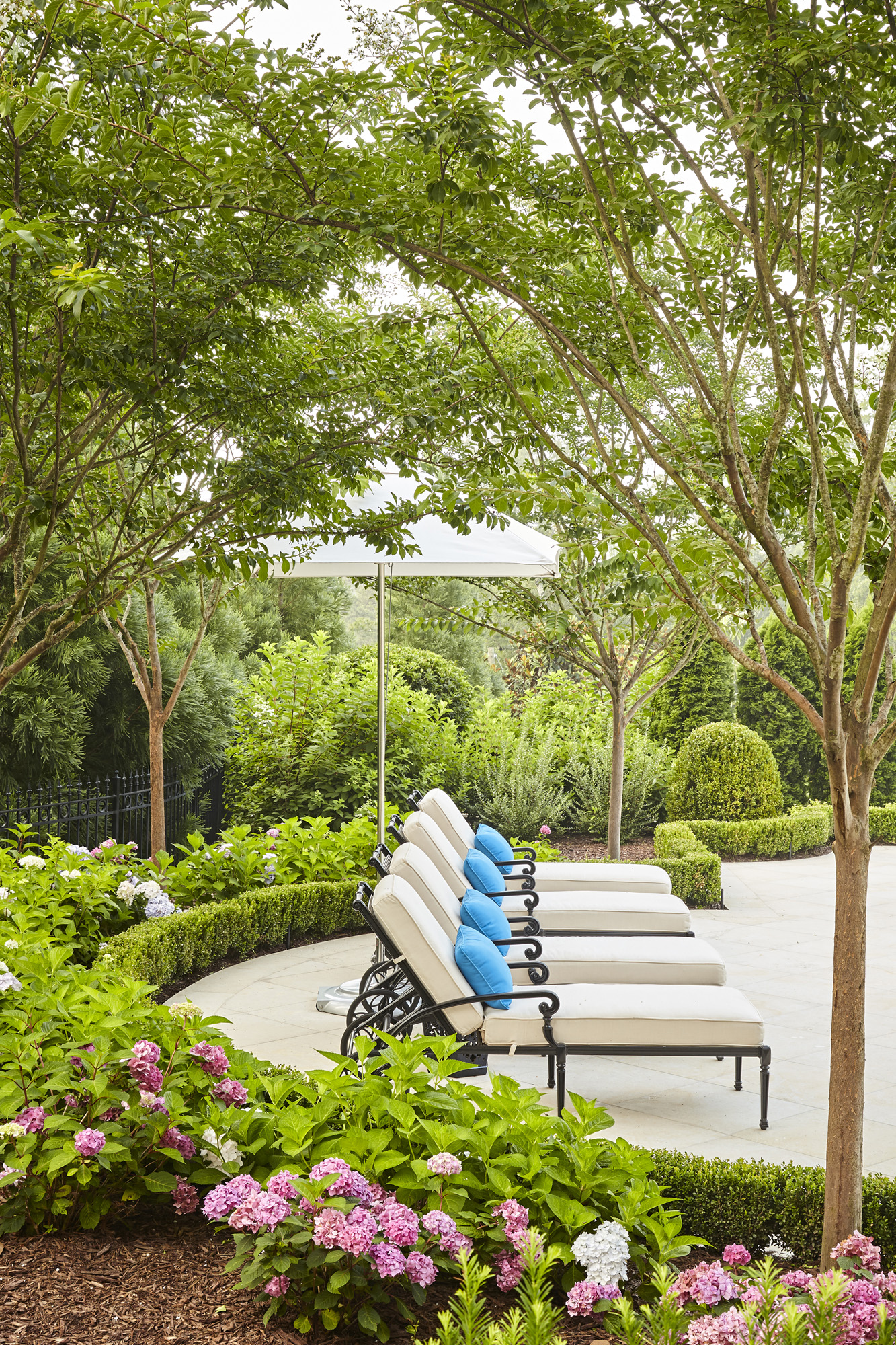 Hydrangea blossoms and boxwood hedge with crape myrtle branches shading chaise lounges poolside by Harrison Design